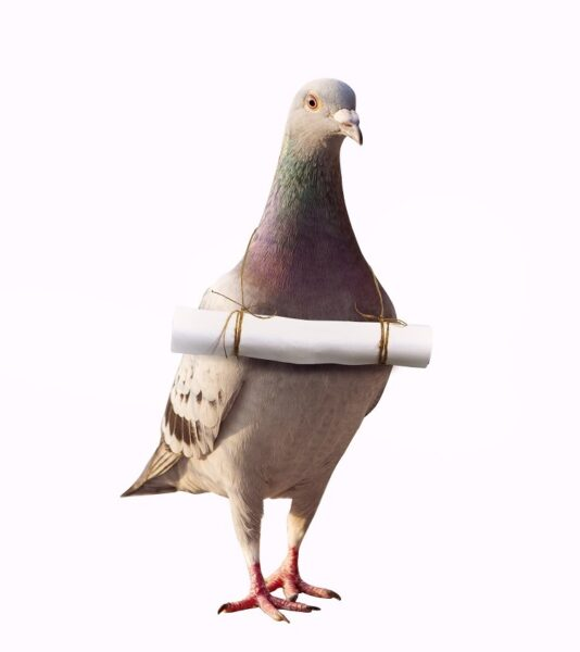 Photo of pigeon carrying post